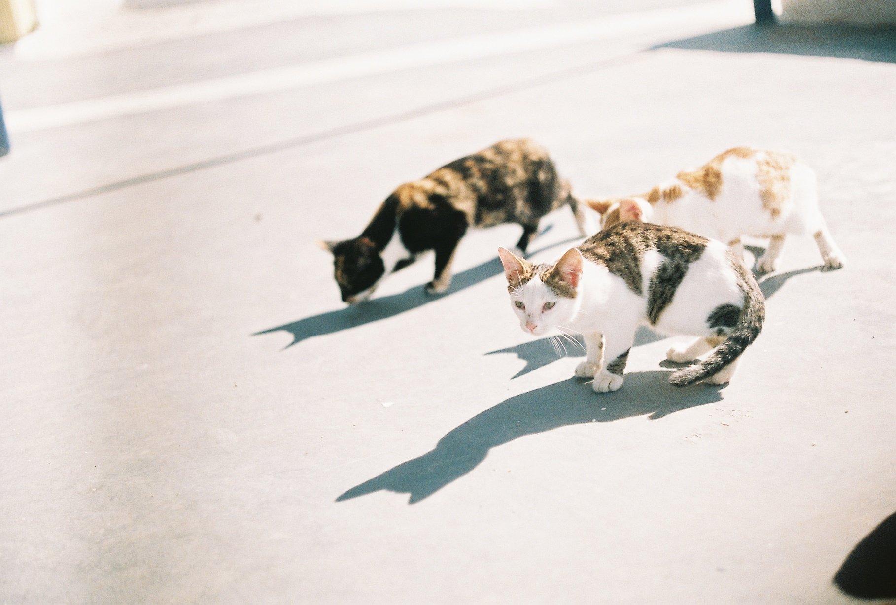 kočky v Aténách